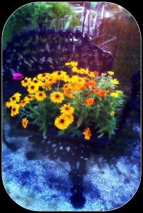 Webster Market Flowers