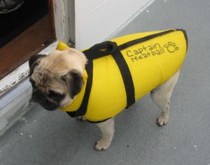 Pug In Life Vest